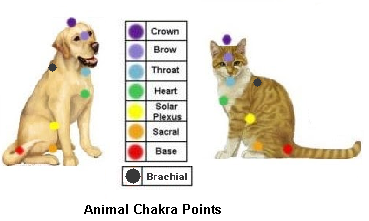 Animal chakra chart for cat and dog